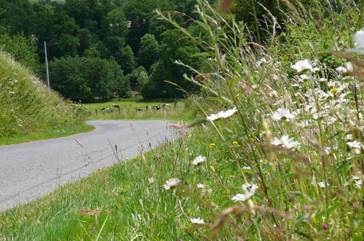 Une route fleurie en Calvados