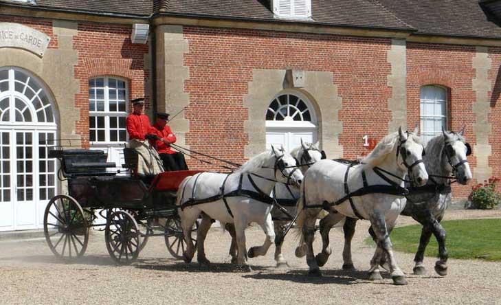 Le haras du Pin, ateliers découverte, visites diverses, réceptions et réunion au sein château.