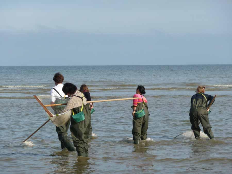 Activité Pêche à la crevette dans le Calvados