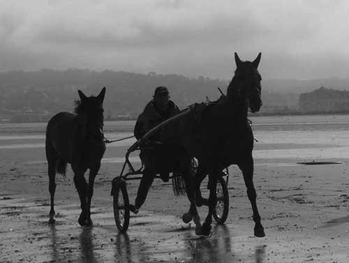 Chevaux sur la plage de Deauville - Trouville