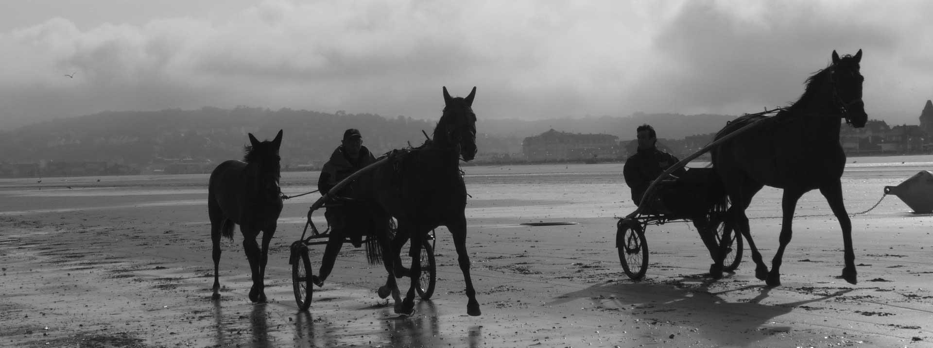 Chevaux sur la plage de Deauville et Trouville