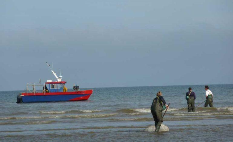 Activité Pêche à la crevette en Normandie