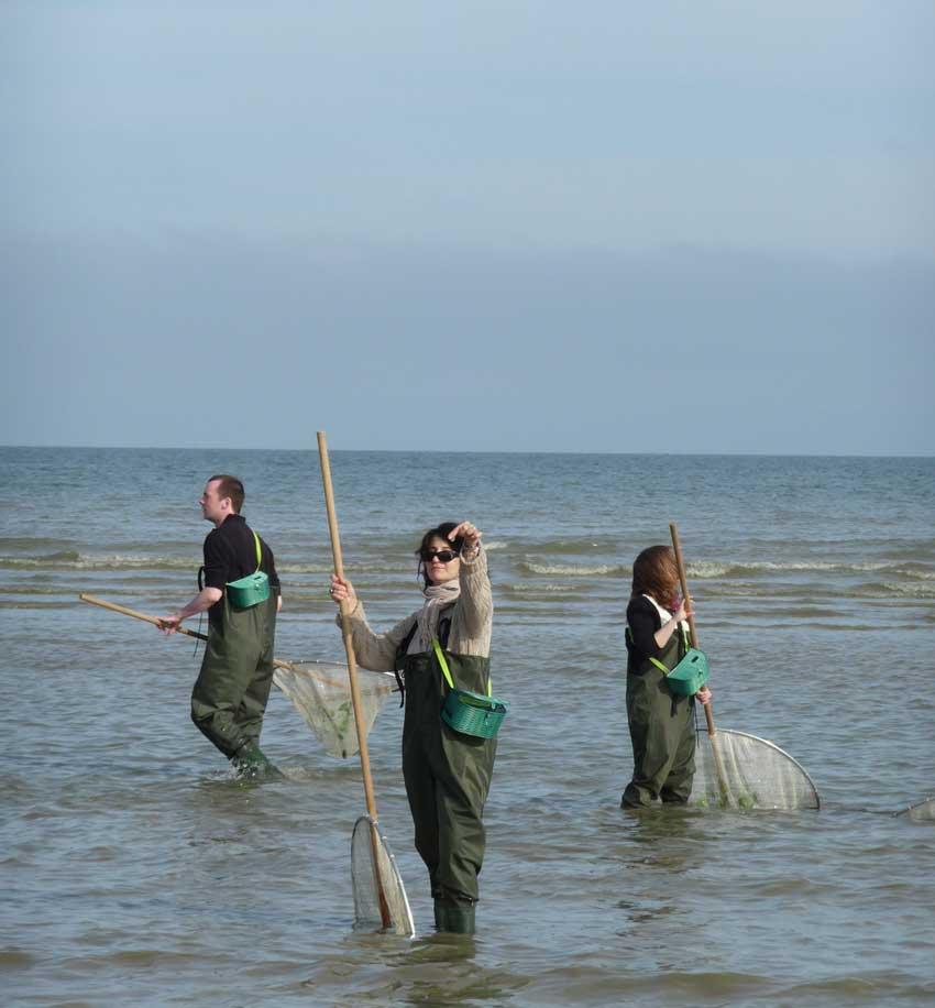 Pêche à la crevette en Normandie