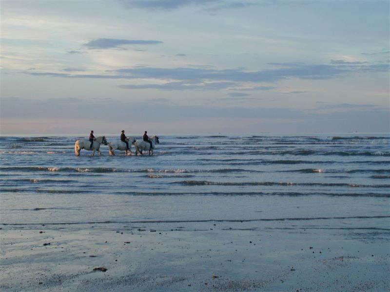 Activité cheval en Normandie