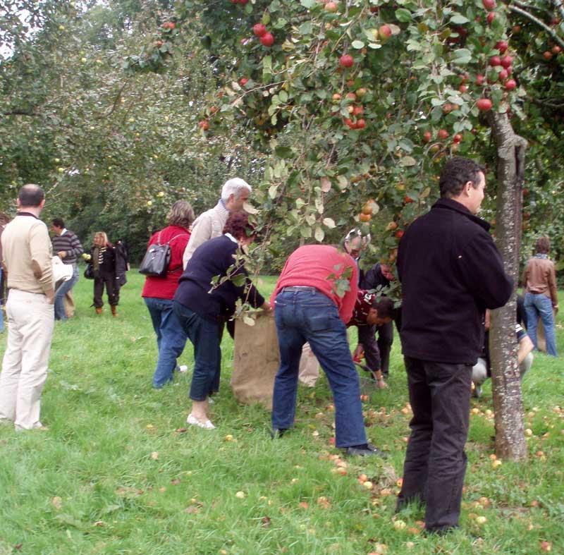 Ramassage des Pommes une activité de team building en Normandie