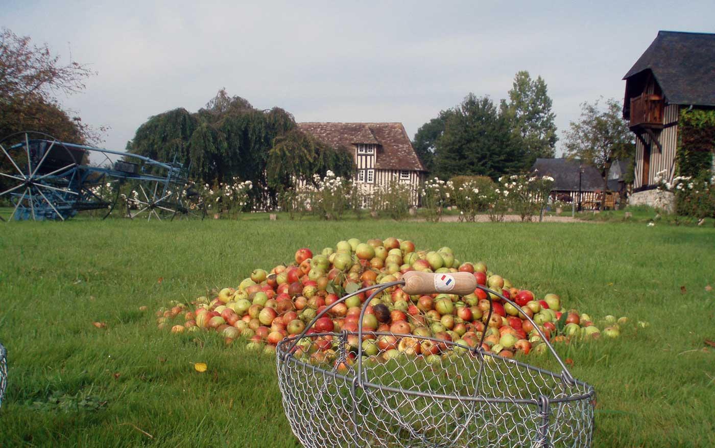 Les pommes une activité typiquement normande