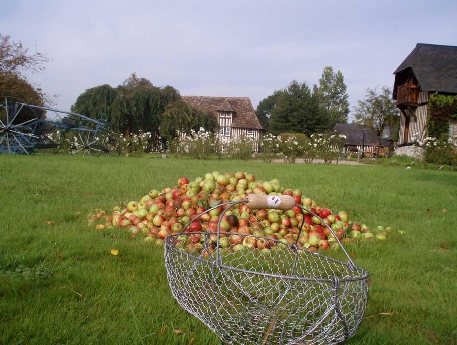 les Pommes une activité de team-building en Normandie