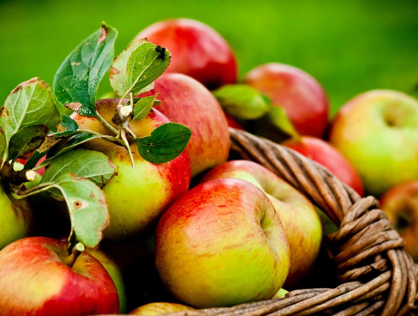 Activité séminaires sur les pommes