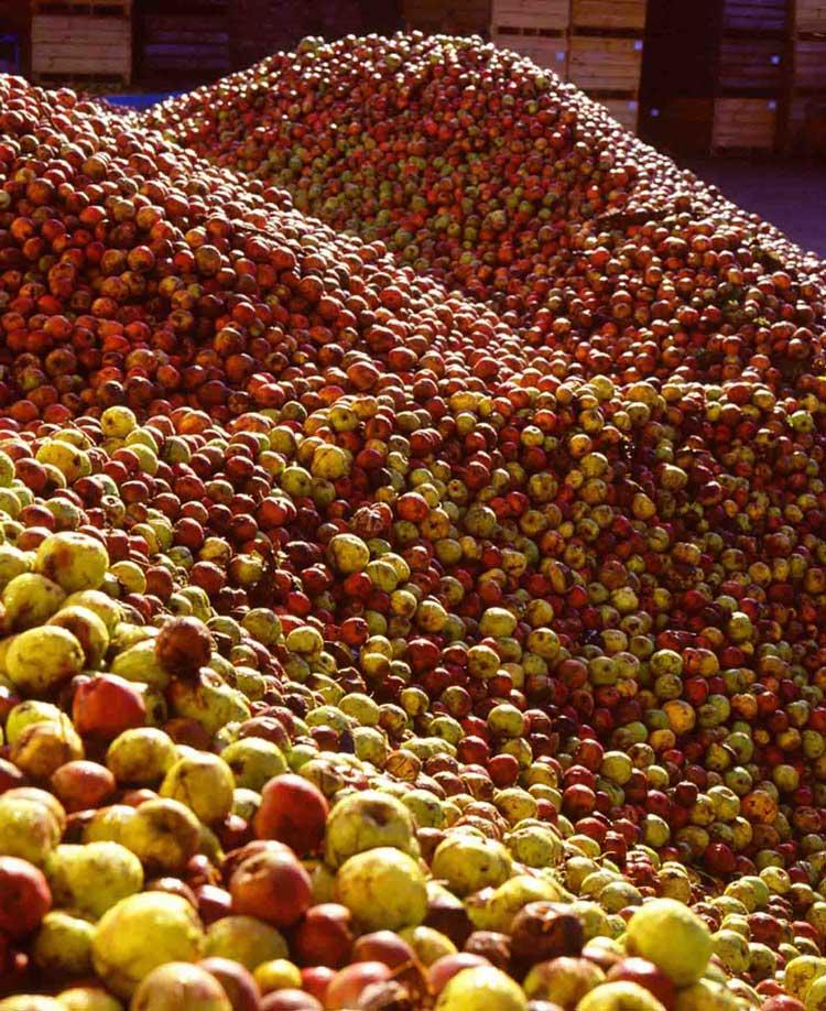 Les pommes une activité très normande Hôtel pour séminaire à Trouville