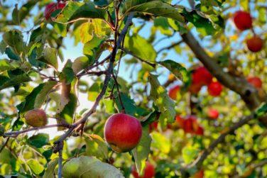 Activité séminaires avec un atelier sur la pomme