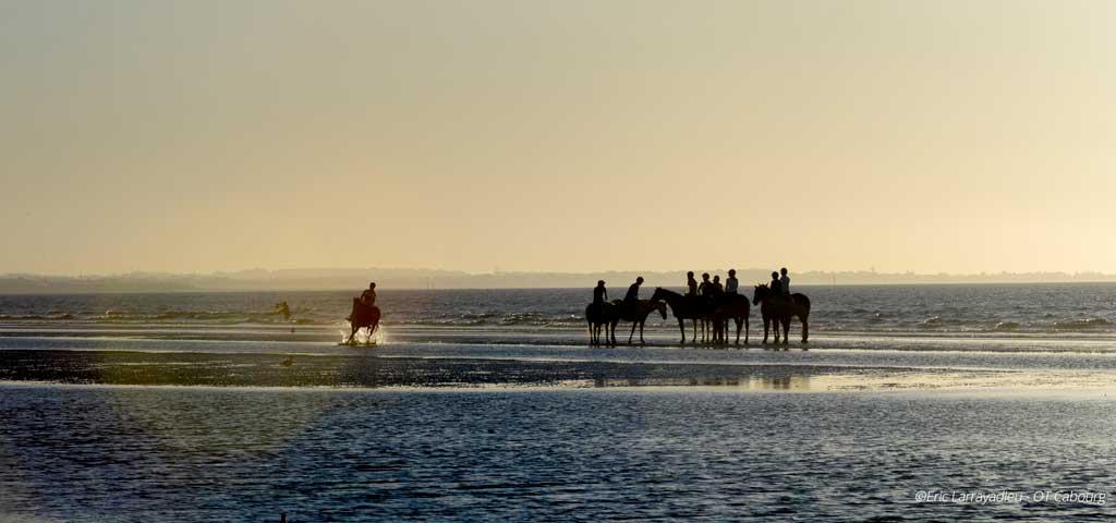 Chevaux sur la plage de Cabourg