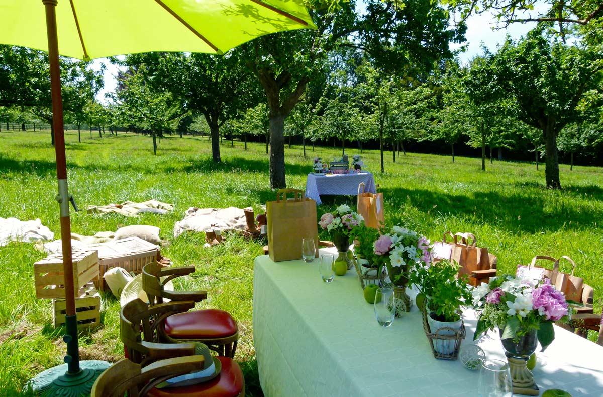 Déjeuner champêtre sous les pommiers en Normandie