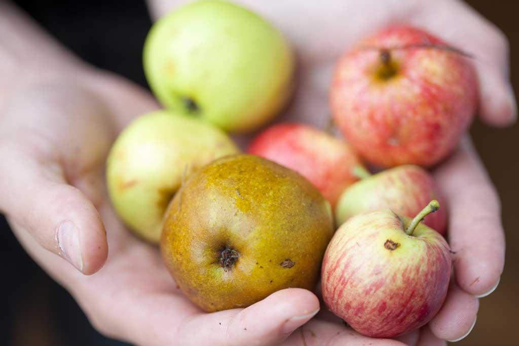 Pommes à cidre Maison Drouin