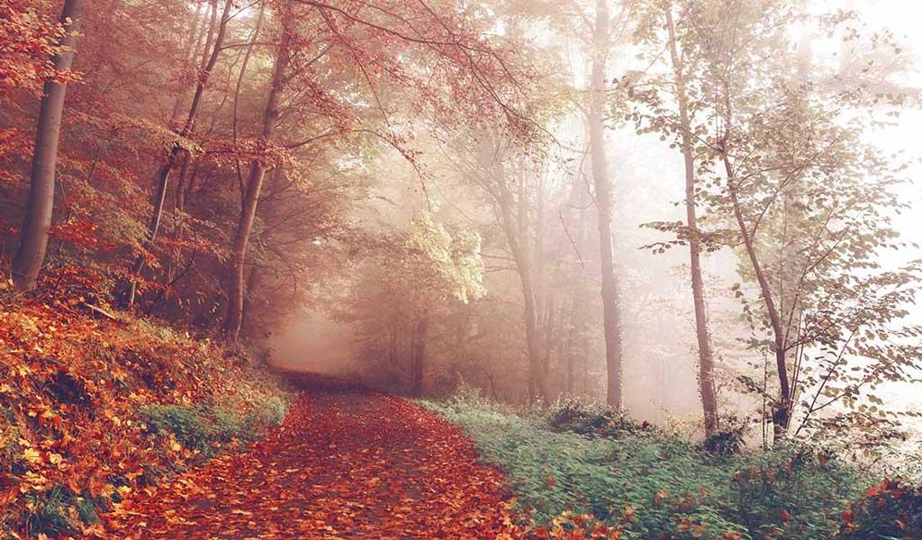 Les chemins forestiers de la campagne normande